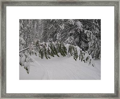 Under The Arch Framed Print by Jewel Hengen