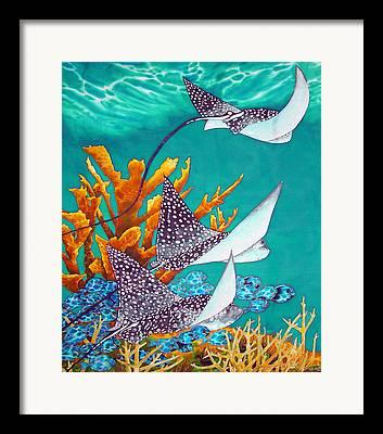 Elk Horn Coral Framed Prints