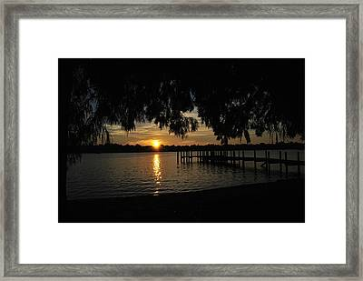 Under The Bald Cypress Framed Print