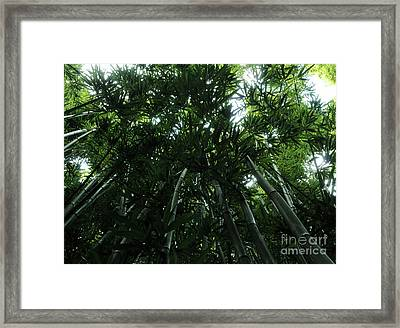 Framed Print featuring the photograph Under The Bamboo Haleakala National Park  by Vivian Christopher