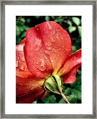 Under The Blossom Framed Print