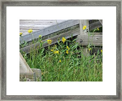 Framed Print featuring the photograph Under The Boardwalk by Laurel Powell