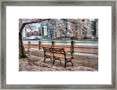 Under The Cherry Tree Framed Print by JC Findley