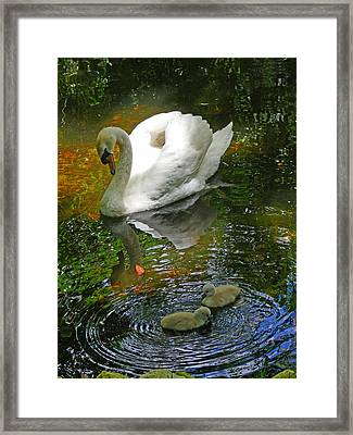 Under The Cobs Watchful Eye Framed Print by Susan Duda