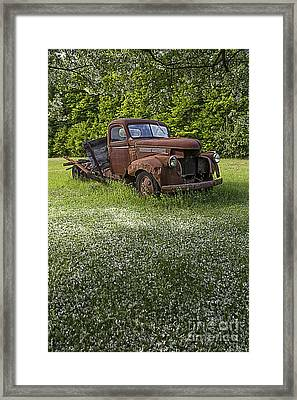 Under The Crab Apple Tree Framed Print