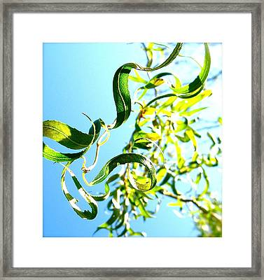 Under The Curly Willow Tree Framed Print