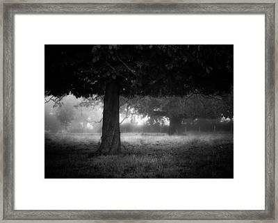 Under The Dark Canopy Framed Print