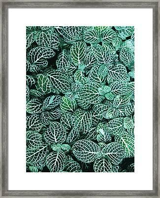 Ha Framed Print by Julio Lopez