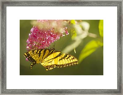 Under The Glow Framed Print