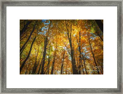 Framed Print featuring the photograph Under The Golden Canopy by Sophie Doell