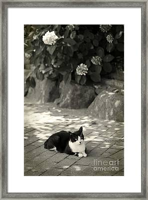 Framed Print featuring the photograph Under The Hydrangea by Aiolos Greek Collections