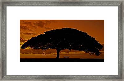 Under The Monkeypod Tree Framed Print by Brian Governale