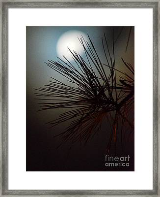 Under The Moon II Framed Print by Maria Urso