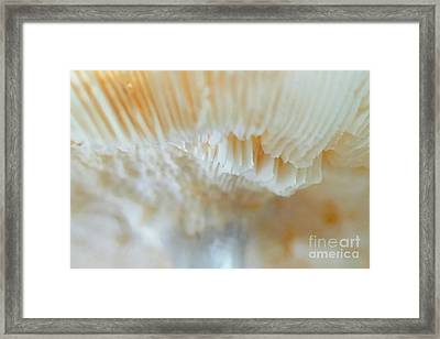 Framed Print featuring the photograph Under The Mushroom by Rudi Prott