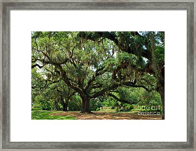 Framed Print featuring the photograph Under The Oaks by Bob Sample