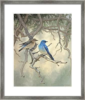 Under The Old Juniper-mountain Bluebirds Framed Print