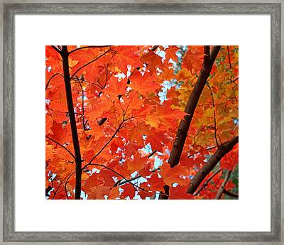 Under The Orange Maple Tree Framed Print