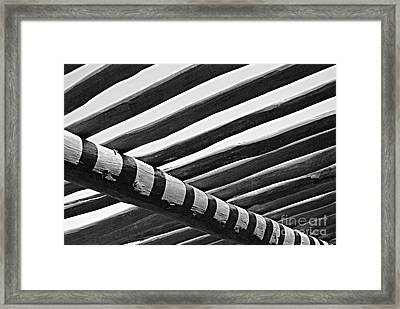 Under The Palapala Framed Print by Jim Rossol