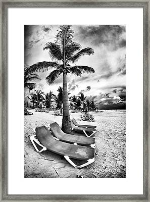 Under The Palm Tree Framed Print by John Rizzuto