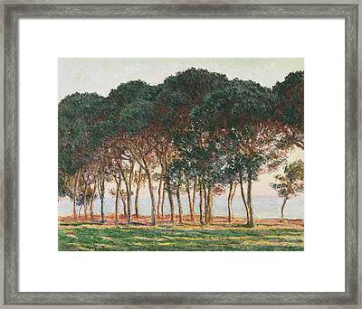 Under The Pines. Evening Framed Print by Claude Monet