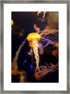 Under The Sea Framed Print by Elizabeth Trujillo