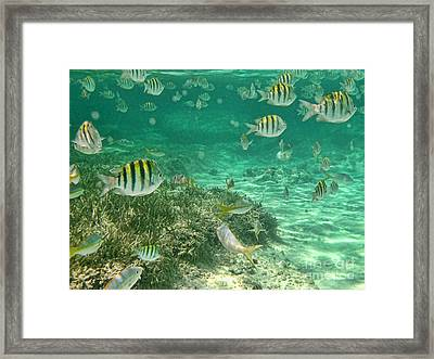 Under The Sea Framed Print by Peggy Hughes