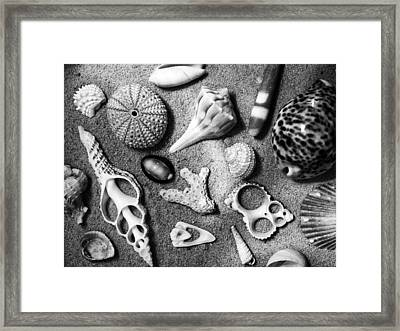 Under The Sea Framed Print by Tom Druin