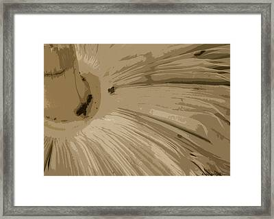 Framed Print featuring the photograph Under The Shroom by Kathy Ponce