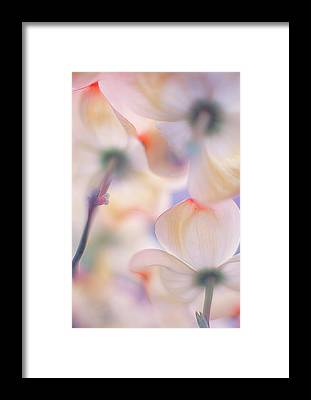 Bokeh Framed Prints