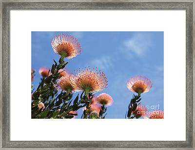 Under The Sun Framed Print by Neil Overy
