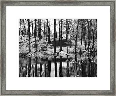 Under The Tall Trees Framed Print by Luke Moore