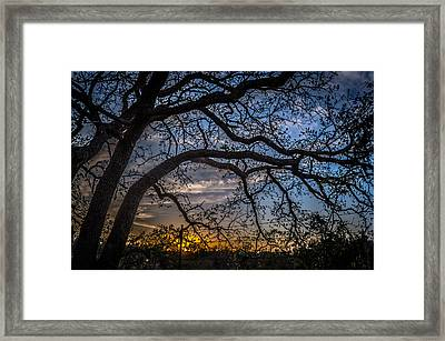 Under The Tree And Through The Fence Framed Print by Kelly Kitchens