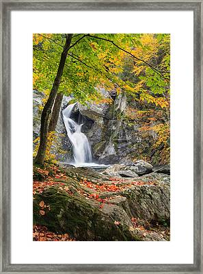 Under The Tree Framed Print by Bill Wakeley