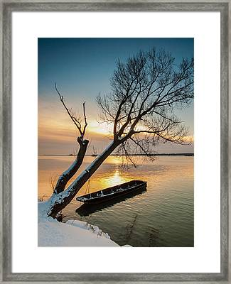 Under The Tree Framed Print by Davorin Mance