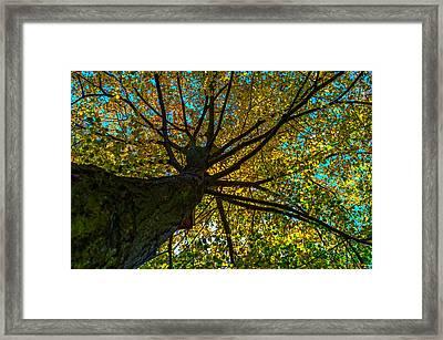 Under The Tree S Skirt Framed Print