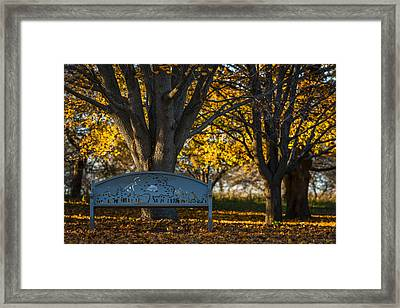 Framed Print featuring the photograph Under The Tree by Sebastian Musial