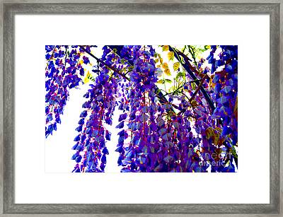 Under The Wisteria Framed Print by Alys Caviness-Gober