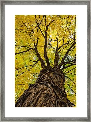 Under The Yellow Canopy Framed Print by Debra Martz