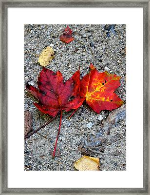Underfoot Framed Print by Mary Sullivan