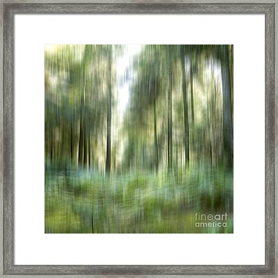 Undergrowth In Spring.  Framed Print by Bernard Jaubert