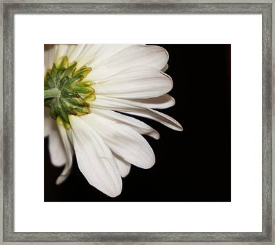 Underneath A Gerber Daisy Framed Print by Laurie Pike