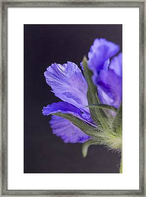 Underneath Framed Print by Caitlyn  Grasso