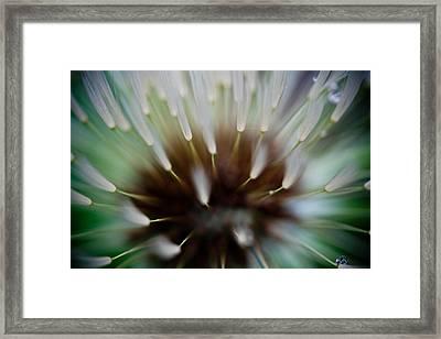 Undersea Dream Framed Print by Shane Holsclaw