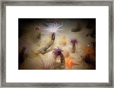 Undersea Life At Monterey Framed Print by Peter Menzel