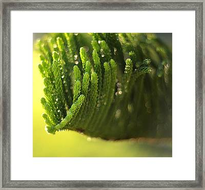 Undersea Framed Print by Laura Fasulo