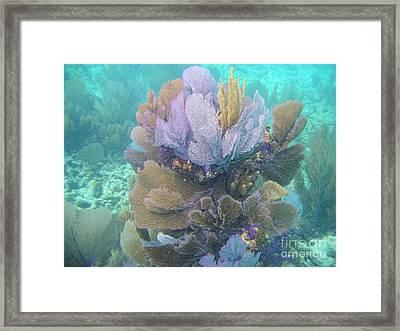 Underwater Bouquet Framed Print by Adam Jewell