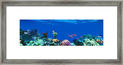 Underwater, Caribbean Sea Framed Print by Panoramic Images