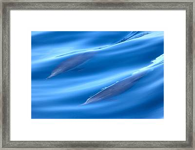 Underwater Dolphins Framed Print