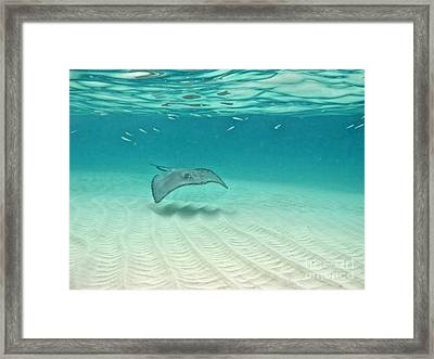 Underwater Flight Framed Print by Peggy Hughes