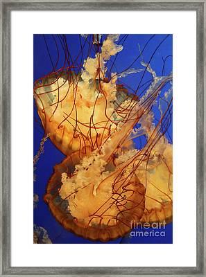 Underwater Friends - Jelly Fish By Diana Sainz Framed Print by Diana Sainz